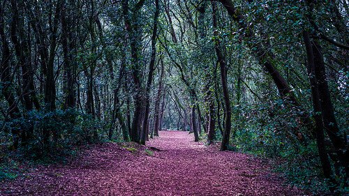 Chapitre 3 : La forêt